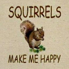 Uh-huh, they really do ! They are my Spirit Animal ! Squirrel Girl, Cute Squirrel, Squirrels, Raccoons, Rodents, Squirrel Pictures, Animal Pictures, Cute Pictures, Animals And Pets