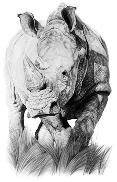 Pin by joan wagner - i love drawings on drawing animal & creatures in 2 Bird Drawings, Love Drawings, Tattoo Drawings, Realistic Animal Drawings, Drawing Animals, Pencil Drawings, Animal Sketches, Art Sketches, Rhino Tattoo