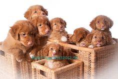 NSDT Pups 03132012-52.jpg (560×373)