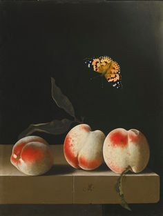 Adriaen Coorte (Dutch 1660 - circa 1707), Three Peaches on a Stone Ledge, with a Red Admiral Butterfly.