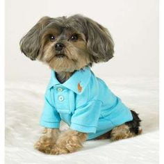 Image detail for -Dog Polo Shirt | ThisNext