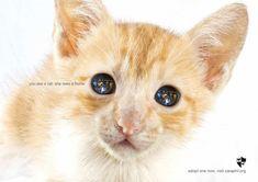 carteles en contra del maltrato de animales 22