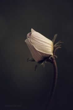 gyclli: Flowerby yavuzselimturan _ Melancholie soul