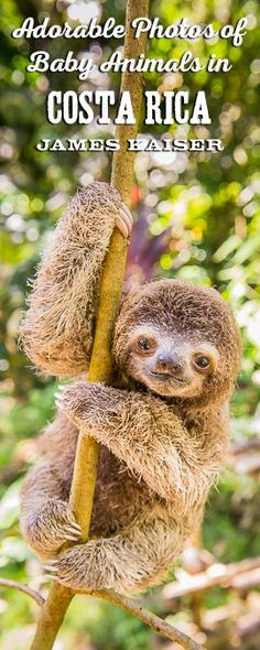 Adorable photos of baby sloths, monkeys, turtles, frogs and more!