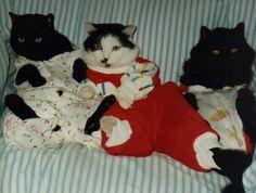 Pet Sayings: The cat's pajamas