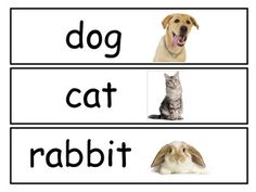 I use these word cards in my writer's workshop during my week on Pets!  I've tried to include the most common household pets but may have missed a few.  I print them out on cardstock, laminate and put on a jump ring.  Thanks so much and please let me know if you have any problems downloading!