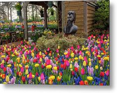 Keukenhof Motley Flower Design Metal Print by Jenny Rainbow. All metal prints are professionally printed, packaged, and shipped within 3 - 4 business days and delivered ready-to-hang on your wall. Choose from multiple sizes and mounting options. Fine Art Prints, Framed Prints, Beautiful Flowers Garden, Gifts For My Wife, Art Techniques, Botanical Gardens, Spring Flowers, Fine Art Photography, Flower Designs