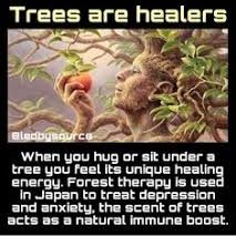 As crazy as this might sound I think this is true. I always, always feel very grounded & comforted while in the woods and/or sitting & yes, even hugging a tree💚❤❤💚💚💚 Spiritual Wisdom, Spiritual Awakening, Cultures Du Monde, Spirit Science, Mind Body Soul, Natural Healing, Fun Facts, How Are You Feeling, Life