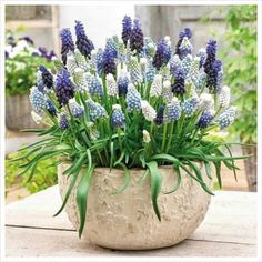 spring planters and plants for easter - Pflanzideen Beautiful Flowers, Flower Pots, Container Garden Design, Plants, Planting Flowers, Flower Arrangements, Plant Design, Spring Flowers, Garden Design