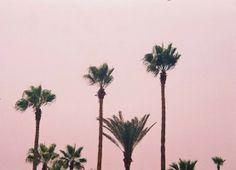 pink sky + palm trees
