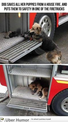 Another reason why dogs are awesome. Isn't this the most precious?