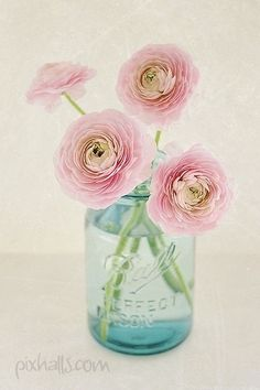 Pink ranunculus in a blue mason jar