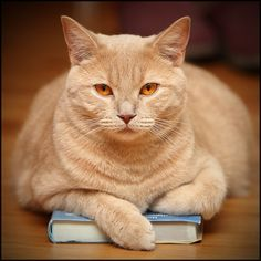 Because cats love to do this.....especially if the book is open and you're trying to read.