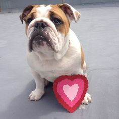 The best Valentine of all xx winstonthewatchdog.com