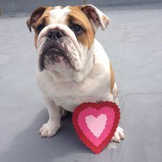 The best Valentine of all xx winstonthewatchdog.com