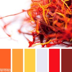 Simply Saffron #patternpod #patternpodcolor #color #colorpalettes