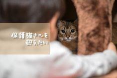 アラフォー夫婦だけど猫の里親になりたい里親サイト譲渡会保護猫カフェ : もうマイルドに生きたい 猫の里親になりたい