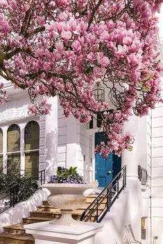 Where to See Magnolia and Cherry Blossom in London (Printable Guide and Map) - Magnolia-in-The-Boltons,-London Magnolia, Exterior Design, Interior And Exterior, Blossom Trees, Cherry Blossoms, London House, Pretty Flowers, Exotic Flowers, Silk Flowers
