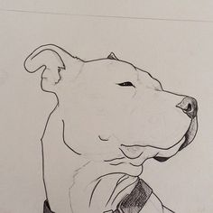 Beginning a drawing of my Beat Box as an example to put on my etsy shop! I'll be posting a pic of my etsy shop when it's up and running! Cool Art Drawings, Animal Drawings, Drawing Sketches, Drawings Of Dogs, Kunst Inspo, Art Inspo, Pitbull Drawing, Drawing Techniques, Dog Art