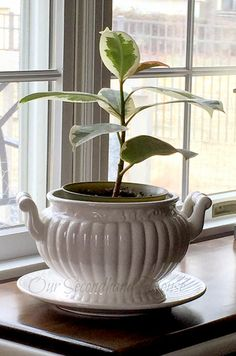 Our Secondhand House: Eggshell Water For House Plants?