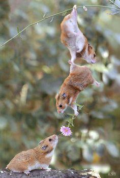 俺が少しずつ集めてきた動物の可愛い画像を放出したい