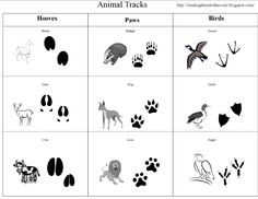 Leading Them To The Rock : Animal Study- Animal Tracks