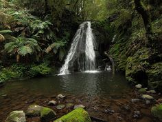 A waterfall cascades over a rock shelf on Five Day Creek New England National Park, Northern NSW, Australia.
