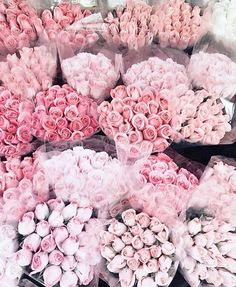 #flowers #ombre #shadesofpink #blush&bashful