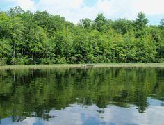 A photo of Bunganut Lake in Lyman, Maine.