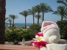 Günstige Hotelangebote, private Transfers, vielfältige Touren und Ausflüge von Sharm El Sheikh zu den Ausflugszielen und Sehenswürdigkeiten in Sharm el Sheikh und in ganz Ägypten.  http://www.sharm-reisen.com