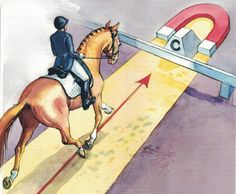 Dressage Solutions: How to Tell When Your Horse Is Forward Enough Dressage Solutions: How to Tell When Your Horse Is Forward Enough. Try this tip from Chris Hickey. - Art Of Equitation Trail Riding Horses, Horse Riding Tips, Horse Tips, Andalusian Horse, Friesian Horse, Arabian Horses, Horse Exercises, Dressage Horses, Draft Horses