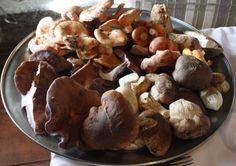 Buscasetas 2013: cinco pistas para disfrutar de la cocina setera en Palencia - http://www.conmuchagula.com/2013/11/14/buscasetas-2013-cinco-pistas-para-disfrutar-de-la-cocina-setera-en-palencia/