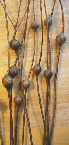 Ideas for plants texture seed pods Organic Form, Organic Shapes, Patterns In Nature, Textures Patterns, Planting Seeds, Planting Flowers, Plant Texture, Seed Pods, Natural Forms