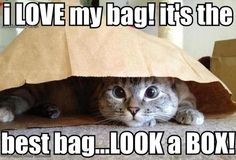 this is what every cat thinks as soon as you get home with groceries!...or my 4 year old son...