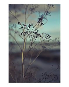 Faded Seed Head photographic print, vintage, retro colours! - £14.95