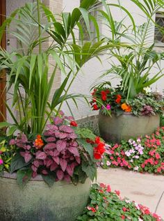 Indoor Container Gardening Using pots with colourful and interesting plants. Ideal for a spot you can't dig. Container Flowers, Flower Planters, Container Plants, Container Gardening, Flower Pots, Hydroponic Gardening, Gardening Tips, Lawn And Garden, Garden Pots