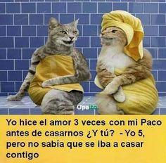 Yo hice el amor 3 veces con mi Paco antes de casarnos ¿Y tú? Yo 5, pero no sabía que se iba a casar contigo.
