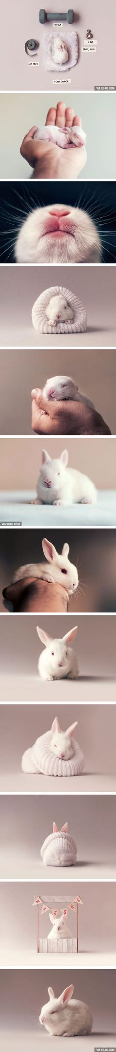 This baby photoshoot of a newborn bunny is awwdorable (By Ashraful Arefin)