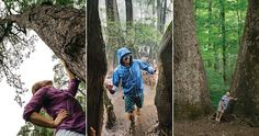 A survey of the state's old-growth forests from the mountains to the sea provides a glimpse into our presettlement — and primeval — past. North Carolina History, Central California, Photo Essay, Kid Crafts, Forests, Day Trips, Summer Fun, Travel Tips, Places To Go