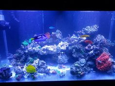 Tips and Tricks on Creating Amazing Aquascapes - Page 27 - Reef Central Online Community