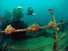 Prince Albert Wreck, CoCo View House Reef, Roatan, Honduras