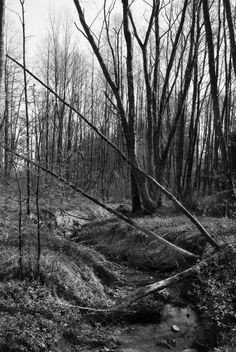 Check out Mystic forest by ChristianThür Photography on Creative Market Nature Photos, Railroad Tracks, Marketing, Creative, Pictures, Photography, Check, Black White Photos, White Photography