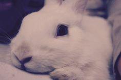 biały królik, symbol pokus ciała, szczęścia, tajemniczości, magii, nieuchwytności chwili...