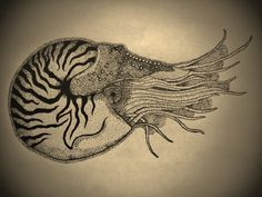 Images For > Nautilus Tattoo Meaning