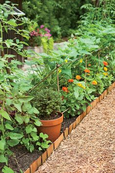 "Flowers and vining vegetables grow together in a narrow bed. John built this lean-to frame out of bamboo poles, cord, and wire screen. Cucumber vines recline on the angled screen, leaving room below for colorful zinnias. Fertile soil keeps vegetables producing. ""We put down humus (decomposed organic matter) that has spooky growing power,"" Carolyn says. ""John grew bell peppers with walls so thick you could hammer a nail with them."""