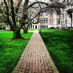 It's spring on the University of Washington Quad #udub #springbreak #cherryblossoms  | Instagram | patbell.com