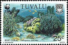 Stamp%3A%20Blue%20Coral%20(Heliopora%20coerulea)%20(Tuvalu)%20(WWF%20Corals)%20Mi%3ATV%20639%20%23colnect%20%23collection%20%23stamps