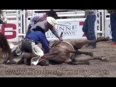 Animals Treated Like Family at Rodeos? This made me cry! The horse at the very end was shaking because that belt thing shocks them so they will buck, so they first took it off!!!!