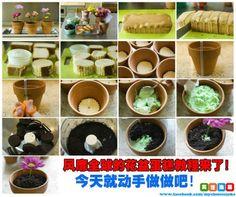 How to make a plant cupcake