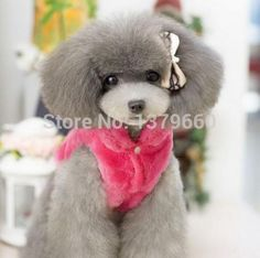 Find more pet products on  http://www.aliexpress.com/store/1379660